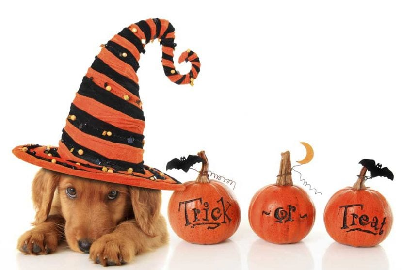 Halloween-Dog-185870302