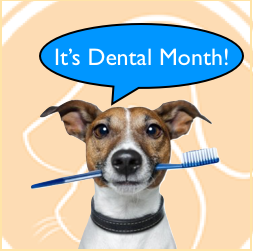 McLean Animal Hospital Dental Month