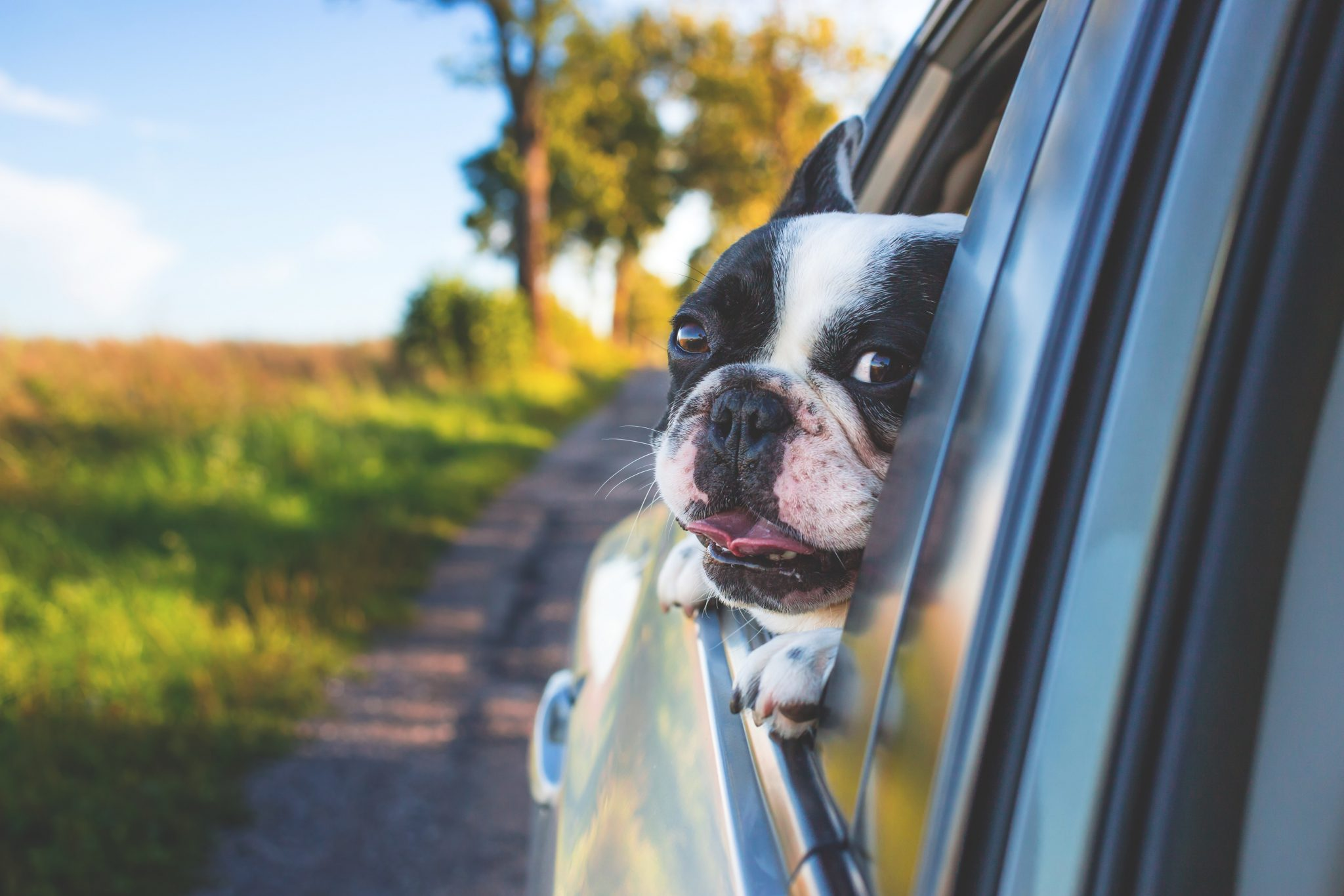 How To Keep Your Dog Safe On A Road Trip Mclean Animal Hospital