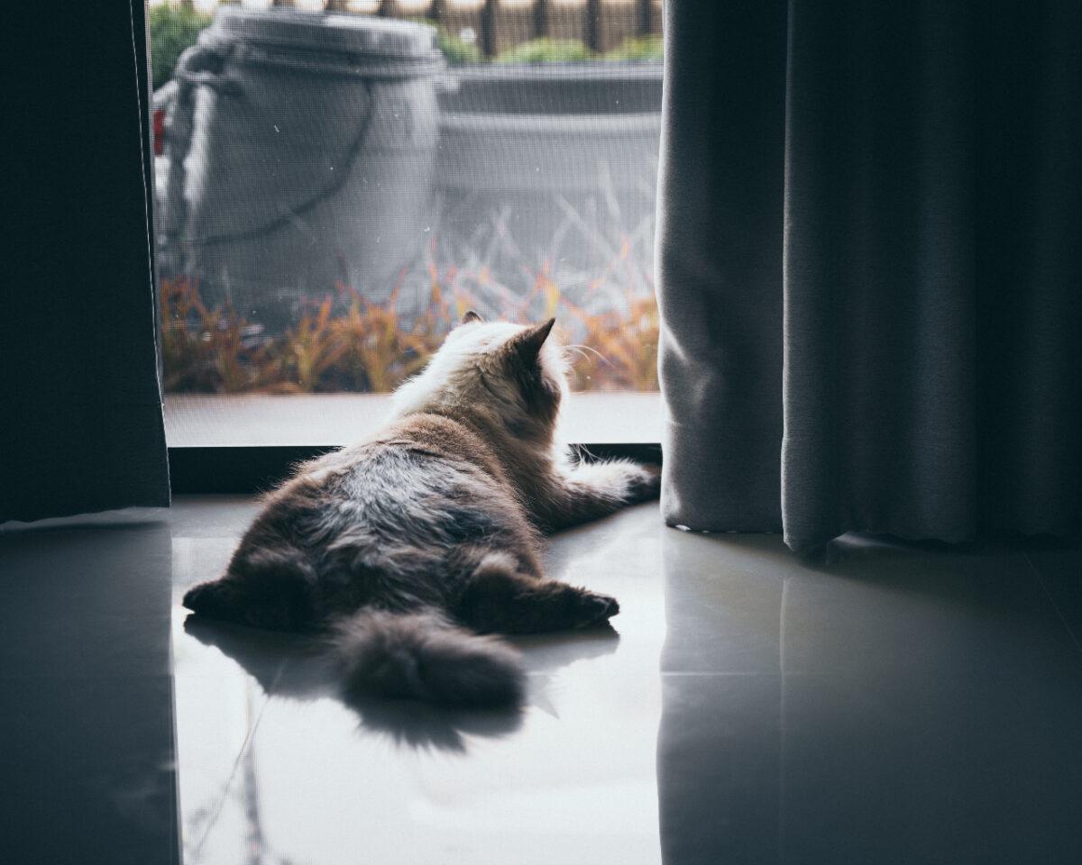 Cat sitting alone waiting